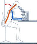 Работа с бинокулярным микроскопом